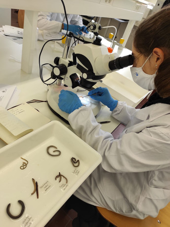 Mediterranean Ecosystems - sorting and identification of soil organisms collected at Foz Côa
