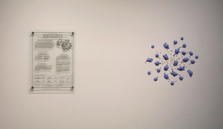 Leukocytes Battling Staphylococcus