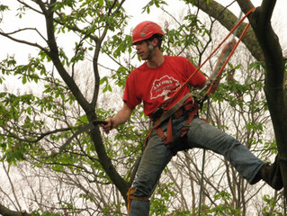 Penn-Del ISA Arbor Day of Service