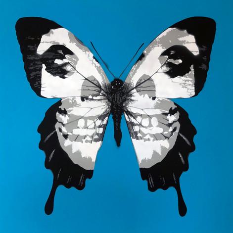 40 x 40 pulgadas Misfits Skullerfly Blue