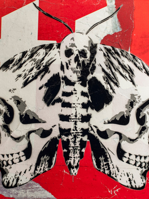 cranium-a-tinea-24-x-24-inch-red.jpg