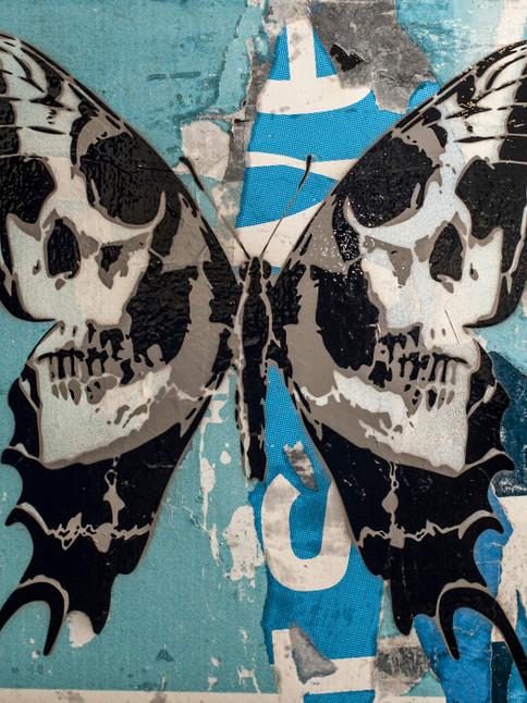calvariam-papilio-24-x-24-inch-blue.jpg