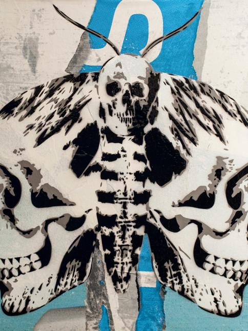 cranium-a-tinea-24-x-24-inch-blue.jpg