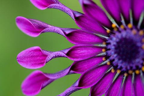 Certified organic herbs & flowers