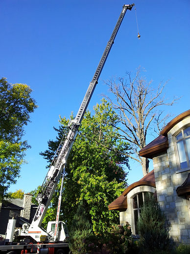 large tree removal with a crane