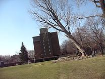 Abattage or Tree Felling