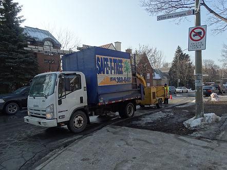 Tree Service Montreal