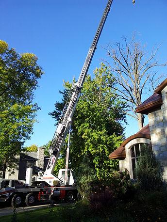 Tree remova by crane