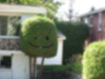 Cedar face