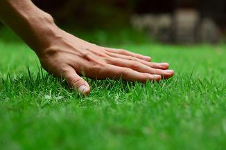 Hand on green lush grass.jpg