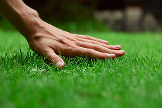 Hand on green lush grass.jpg