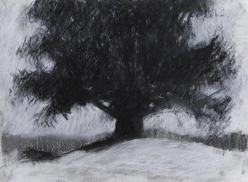 Tree Study, 9x12 inches