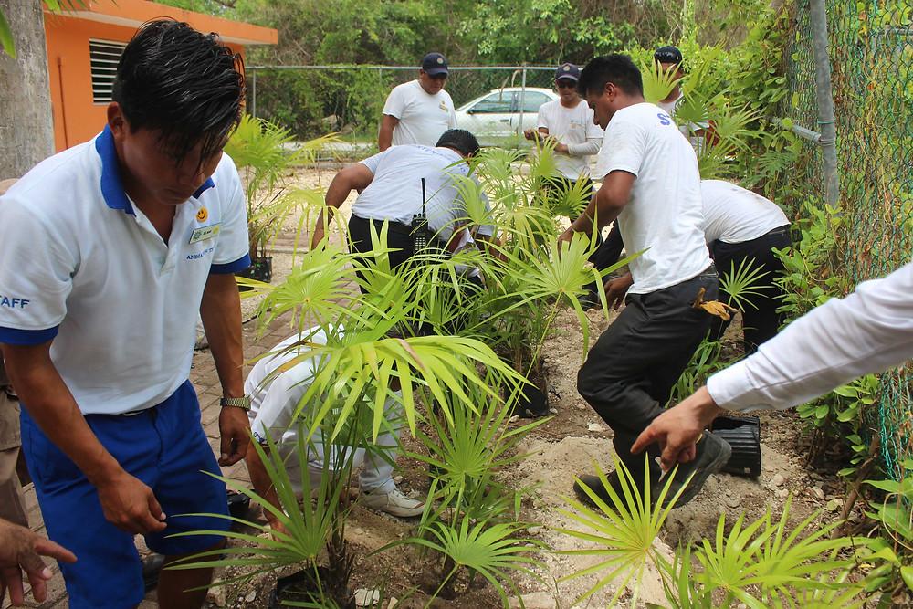 Plantando Árboles Bahia Principe Riviera Maya