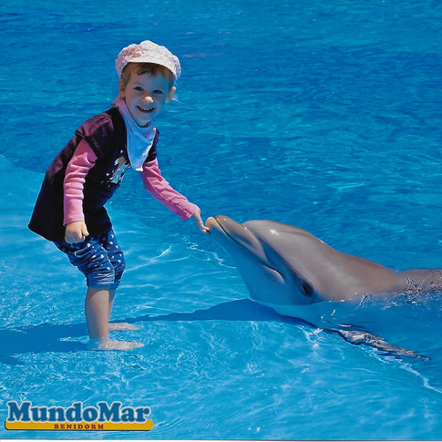 anna delfin.jpeg