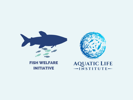 Collaboration between Fish Welfare Initiative and Aquatic Life Institute