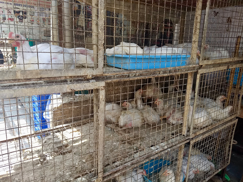 Chickens in battery cages at a wet market in India.