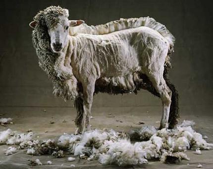 """le """"Wash-Wash"""" Part 3/3 : Le """"Rebuy"""" ou comment tondre deux fois le même mouton?"""