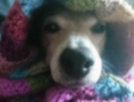Dog Maggie