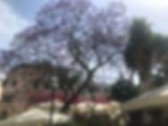 23 tree.jpg