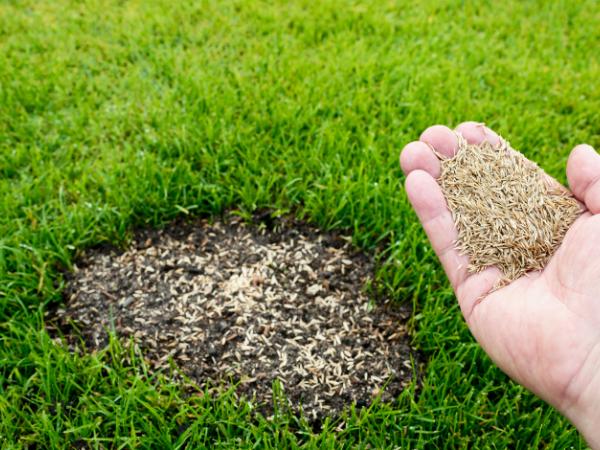 How to fix a dead lawn, lawn care NJ