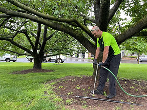 New Jersey Tree Fertilizing