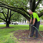 Tree health for homeowners: Learn the benefits of deep root fertilization
