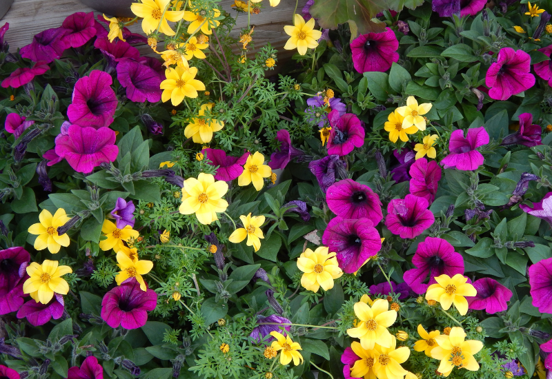 Planting services near me - contrasting colors
