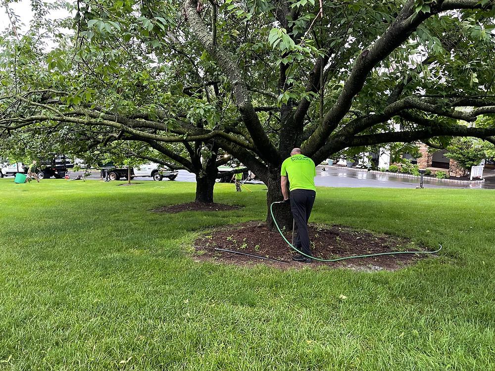 Deep root fertilization, tree fertilization NJ