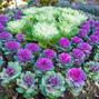 DIY Landscape design tips for beginners: Planning for your annual summer flower garden