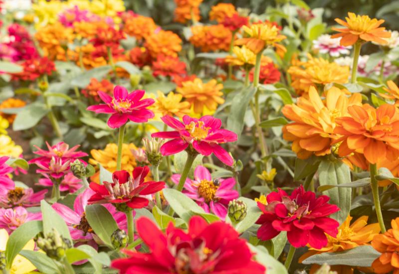 Shrub care nj - similar color scheme flowers