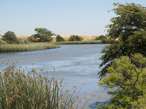 Delta Habitat