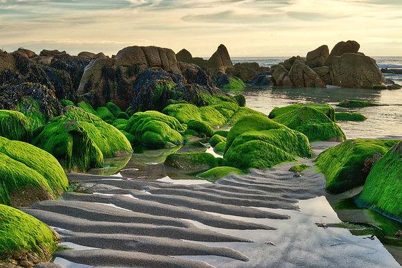 Rocks, algae, sand