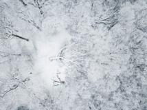 Honouring winter