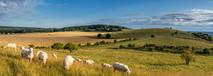 Pitstone hill summer