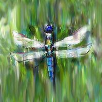 Energy-Landscaping-Logo---Dragonfly.jpg
