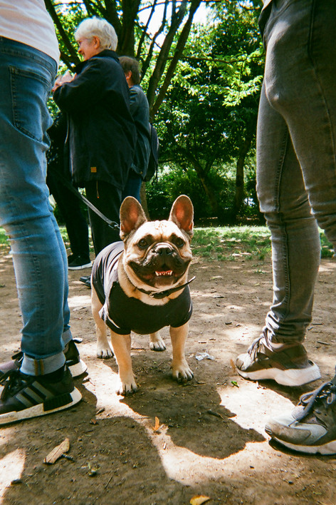 """FEBRUARY 2018: French Couture, Islington: This shot was taken in Barnsbury Park Islington. """"There was a doggie dress up contest,"""" says Ella Sullivan. """"I went across and took some shots of the dogs I liked, including Ace who seemed to be posing."""" Born in London , Ella grew up on the south west coast of Ireland . She returned to London over 20 years ago and now lives in Islington. She is a trained hairdresser. She has just finished a pre-foundation course in Art and Design at Mary Ward Centre in London where she hopes to continue with her studies in September. She goes to art sessions run by SHP near Essex Road, Islington. """"I was having some problems with my housing so that was why I got referred to SHP. I've had good support from them."""""""