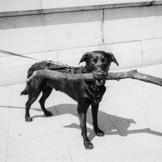 Allisa Christie Dog on Putney Bridge