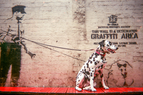 """Banksy's Dalmatian by Saffron Saidi: Cover of 2017 MyLondon calendar and in 2016 exhibition. """"I was ecstatic, I couldn't believe that I'd found another Banksy!"""" says Saffron Saidi. She asked the man who was working in the Hoxton bar near the Banksy mural of a policeman with a Poodle to hold the lead of her Dalmatian Dotdot: """"Another Banksy in Southwark also has a dog with a lead. The barman said that apparently Banksy likes dogs."""" Saffron moved to London from Falmouth in 1996 and lives in Brixton. """"I've spent most of my life in care. I had a documentary made about me in the '90s called Who Cares Wins."""" Saffron got accepted into University of Westminster photography course but had to pull out: """"I was diagnosed with learning disabilities which made the academic writing on the course extremely difficult… but my talent as a photographer was never questioned as I had an unconditional offer."""" She goes to Cooltan Arts, describing it as """"a lifeline"""". """"It keeps me alive."""""""