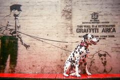 Banky's Dalmatian by Saffron Saidi