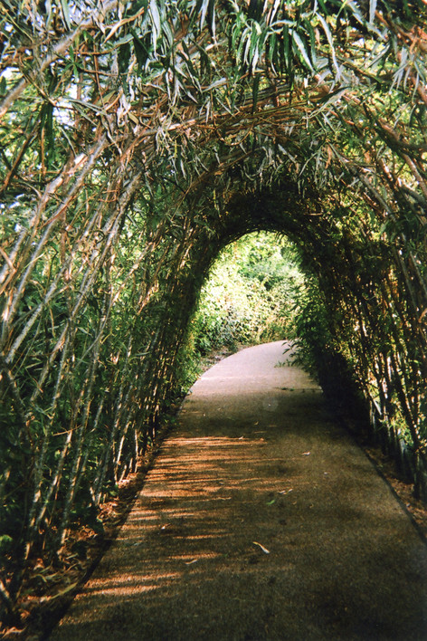 Photo by Ellen Rostant, chosen by public vote for May in 2016 My London calendar. Ellen Rostant took this shot in the Queen Elizabeth Olympic Park. 'It's like you are in a tunnel when you are homeless: It's a journey and there's always going to be light at the end of the tunnel. [Like this photo], there is some dark and light patches in between on the journey.' Aged sixteen, Ellen lives with her parents and siblings in temporary housing where they have been for three years. Her father Andre sells The Big Issue in Soho and her mother works at a supermarket. She recently finished Eastleigh Community School in Stratford and is now going to Leyton Sixth Form College doing geography, 3-D graphic design and photography. 'Hopefully I am able to go into something like landscape photography or maybe portraits or art stuff. I don't have a camera, I use my phone.'