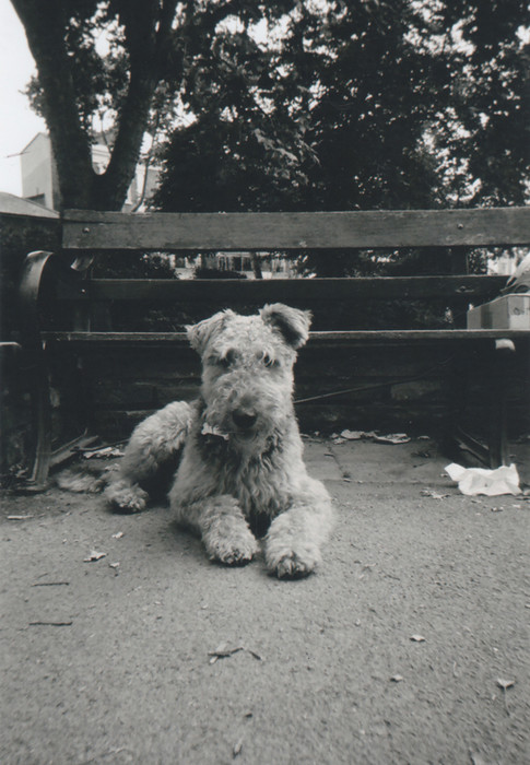 'The dog is called Margaret and she lives in Islington' says Alex Davies, who goes to the Ten Feet Away art group at Margins in the Union Chapel, Islington. 'I normally take photographs really easily all day,' she says, adding that the photo contest with a film camera felt 'kind of different... Using a small view finder after using phone cameras. I went to the park and Janet was there with her dog Margaret who's an Airedale.' Alex says she has many local friends who've got dogs and has been painting dogs now for the last year at Margins for her Pet Icons project. Talking about the photo, Margaret is resting on the paving after running about with the other dogs, I like the bench in the background and the tree outlines : 'That IS my London.