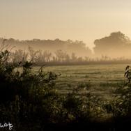 Pasture Fog