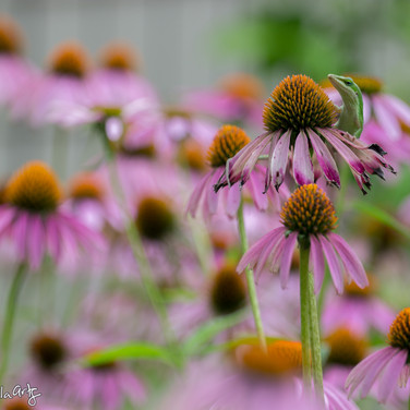 Flower Prowler