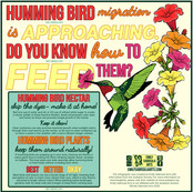 Hummingbird Infographic