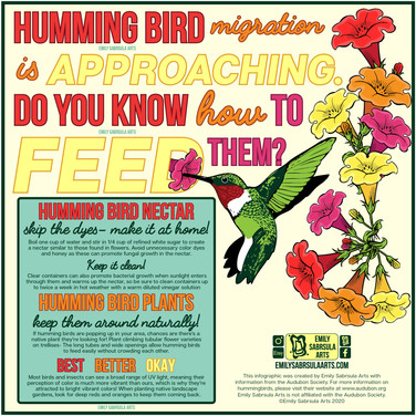 Hummingbird Infographic