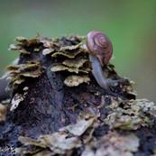 Rain, Snail