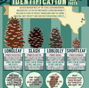 Nacogdoches Pinecone Infographic