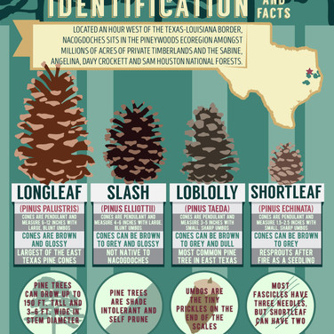 Nacogdoches Pinecone Infographic