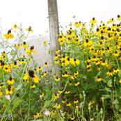 Pasture Flowers