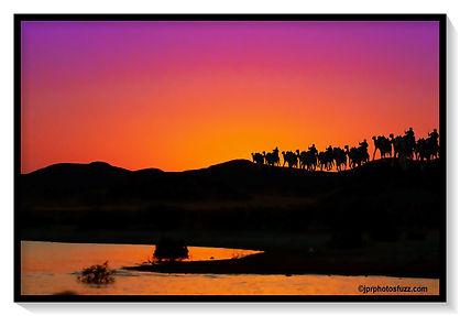 ABOU SINBEL Camel 4_ Egypte.jpg